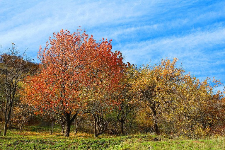 Autumn_landscape_in_Aghveran