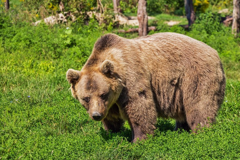 The Bear Sanctuary in Pristina rescues bears that once were kept in cages in Kosovo and North Albania