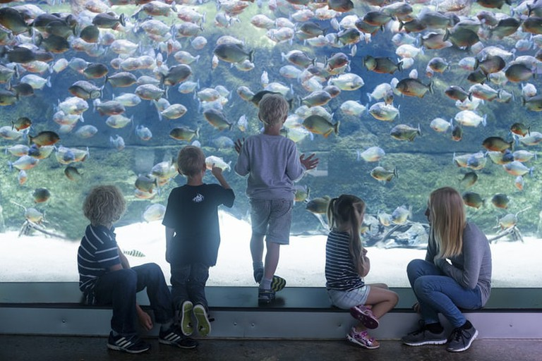 The Blue Planet Aquarium