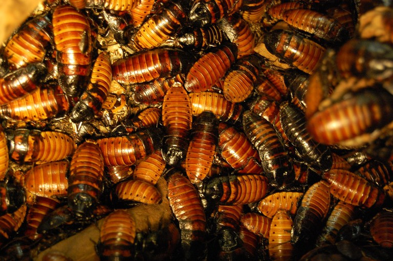 Cockroach farm China