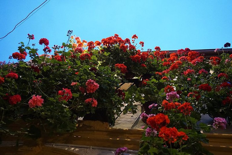 Córdoba_Spain_-_Fiesta_De_Los_Patios_De_Córdoba_-_2015_(18378583269)