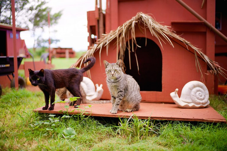 Rescued cats | © Lanai Cat Sanctuary