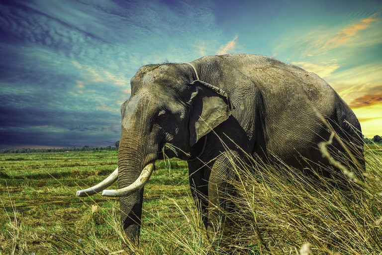 Elephants are one of Thailand's national treasures, and visitors can log some one-on-one time with the gentle giants at conservation parks throughout the country