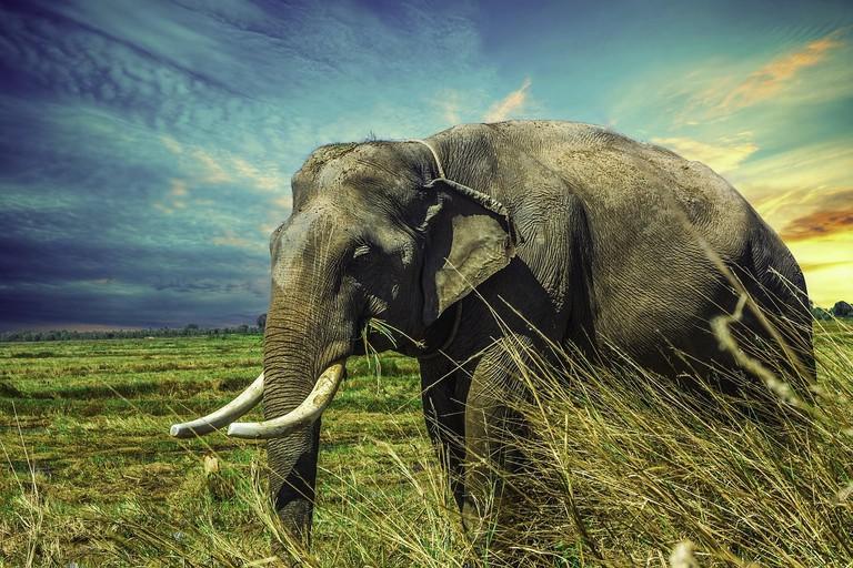 elephant-2729415_1280