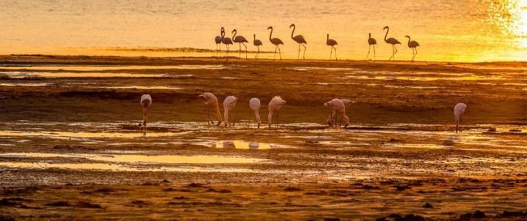 Flamingos on Lake Chrissiesmeer