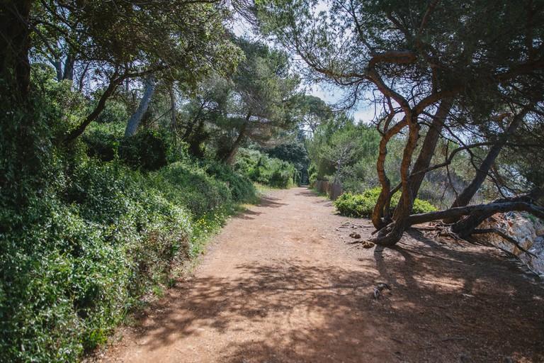 JCTP0068-ile sainte marguerite-Cannes-France-Fenn--188