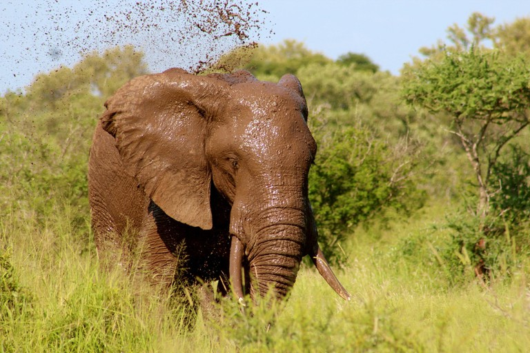 Elephant having a mudbath after the rains