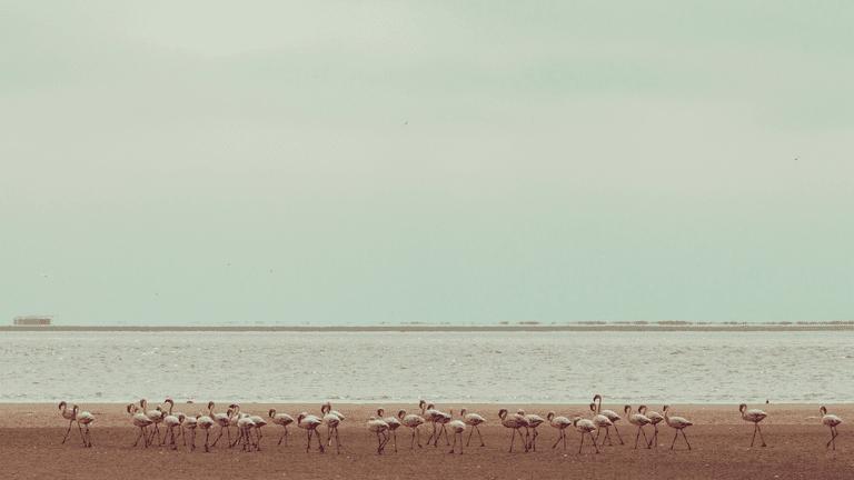 Flamingos in Windhoek, Namibia