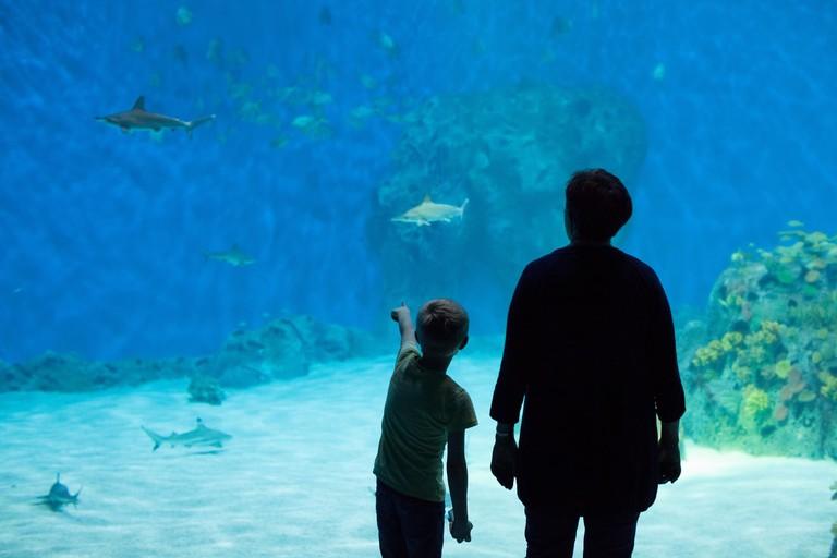 Den Blå Planet Denmark's Aquarium