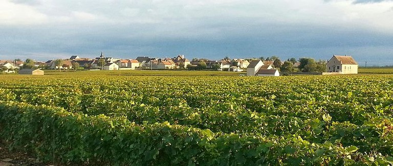 Puligny-Montrachet vineyard