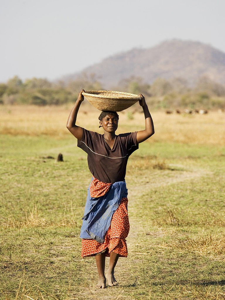 Tonga woman carries a basket with millet to her village at the Lake Kariba, Zambia