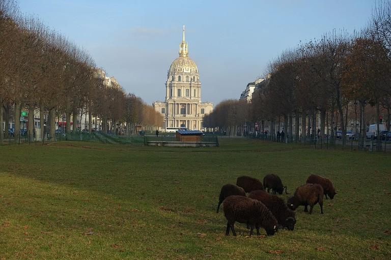 Sheep_@_Avenue_de_Breteuil_@_Paris_(31410767902)