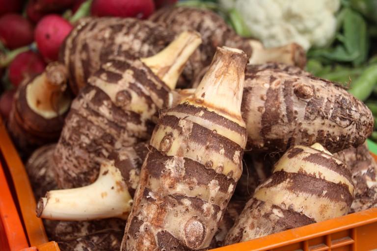 Raw kolokasi root grows in Cyprus