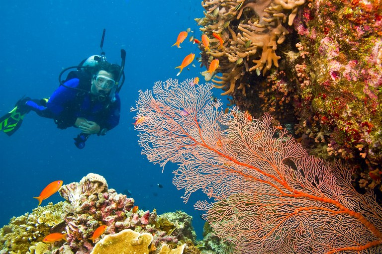 Scuba diver viewing a variety of colourful coral of Great Barrier Reef, Australia