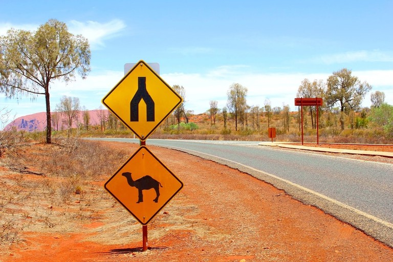 Camel warning road sign near Uluru, Australia