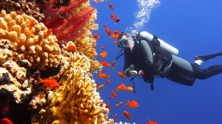 Scuba diver watching beautiful colourful coral reef with shoal of red fish