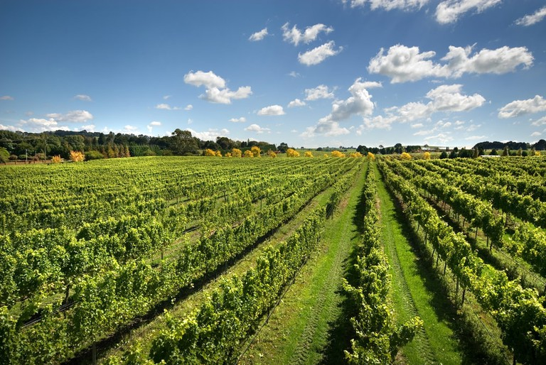 Vineyards near Sutton Forest, on the Southern Highlands of New South Wales
