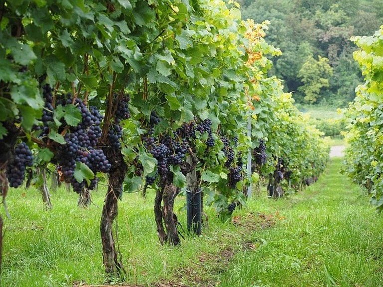 vineyard-694197_640