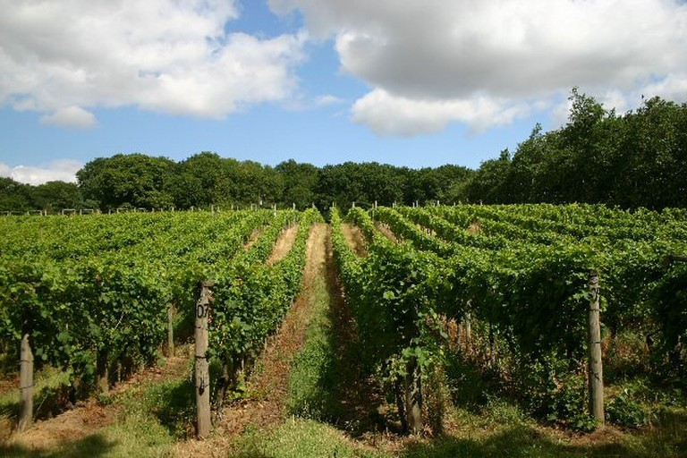 Vineyard_at_Wyken_Hall_-_geograph.org.uk_-_216836