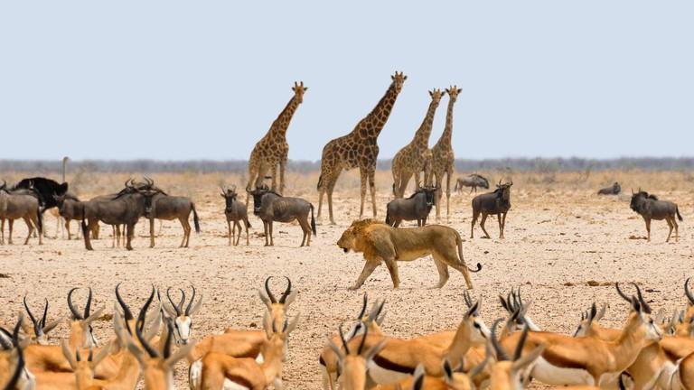 africa-1170179_1280