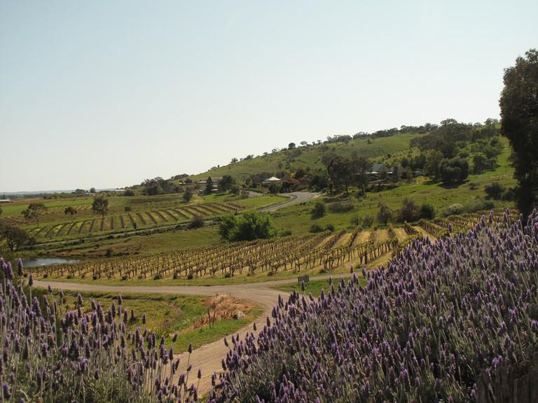 Exploring the Barossa Valley