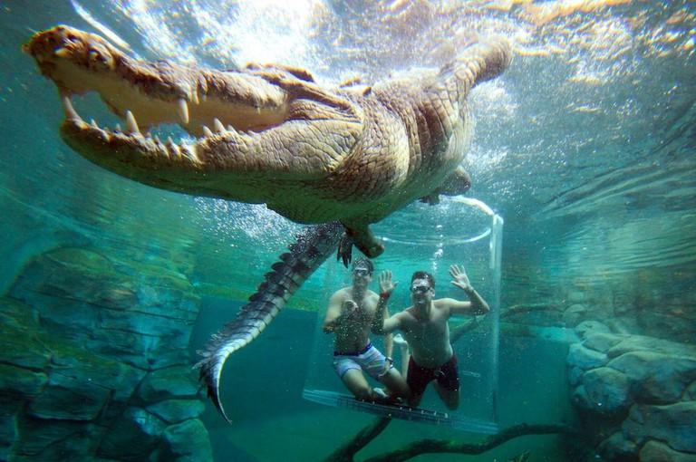 Cage of Death of Crocosaurus Cove © Croc Cove