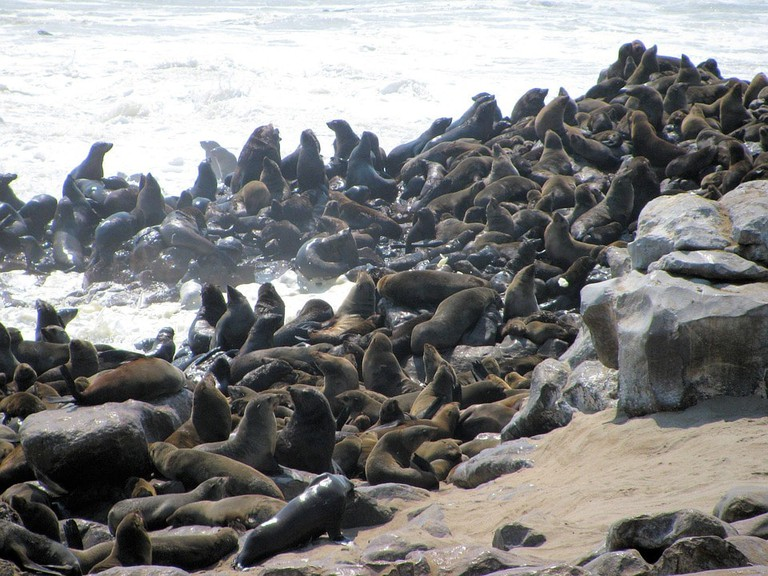 Cape Cross Fur Seals