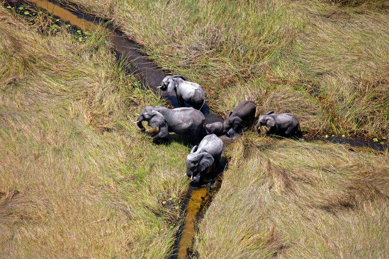 Elephants spotted in the Okavango Delta