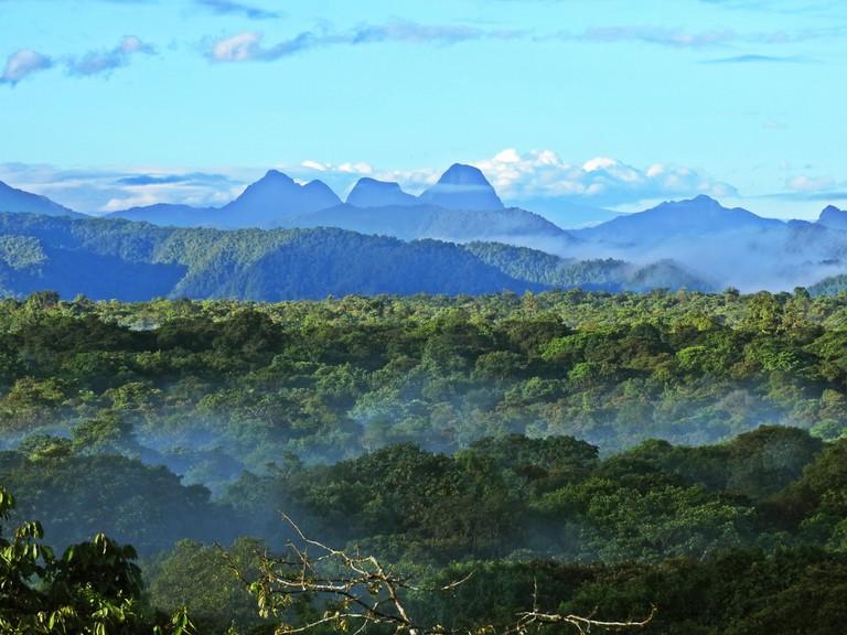 The jungles of La Planada Natural Reserve