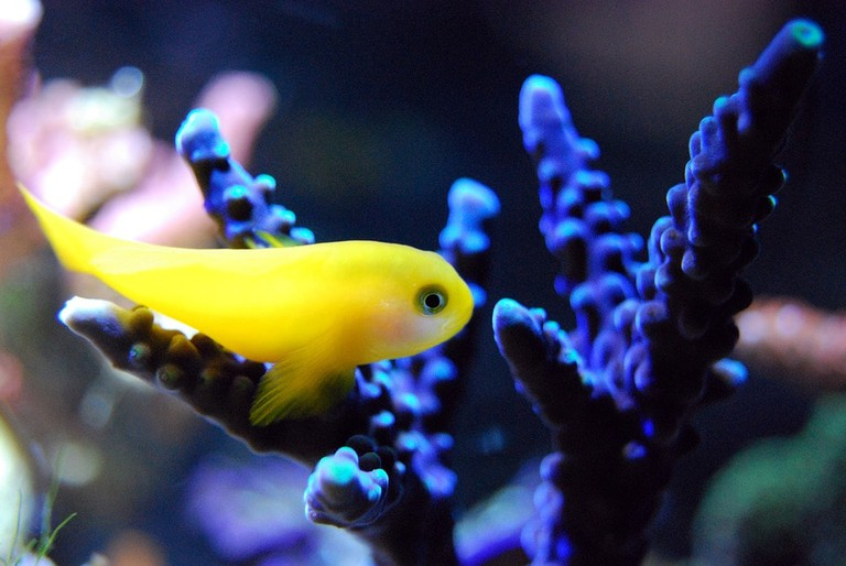 fish-2706704_960_720