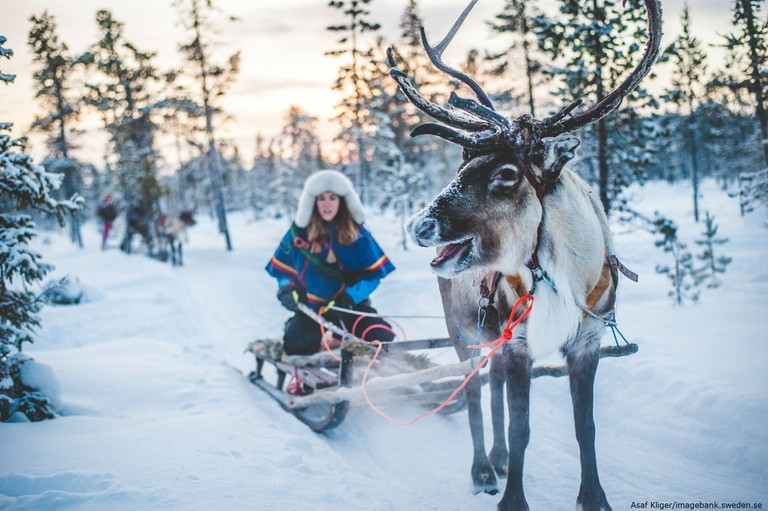 Reindeer husbandry is a big part of Sami culture