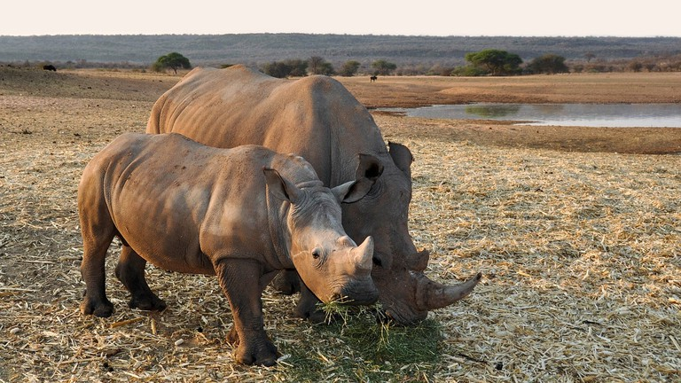 rhino-1170131_1280