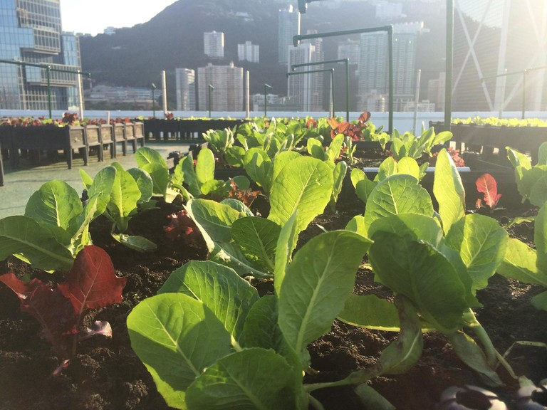 Rooftop Farm Hong Kong 1