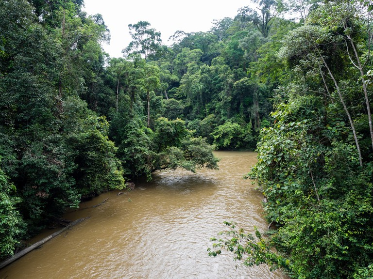 Temburong River, Virgin Rainforest, Ulu Temburong National Park, Brunei