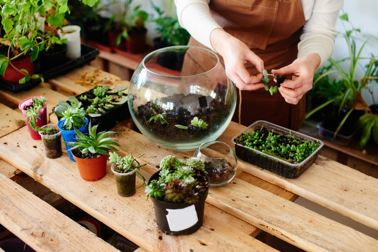 Florist making a mini terrarium