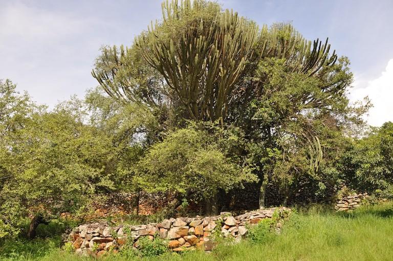 Natural vegetation at the cultural landscape
