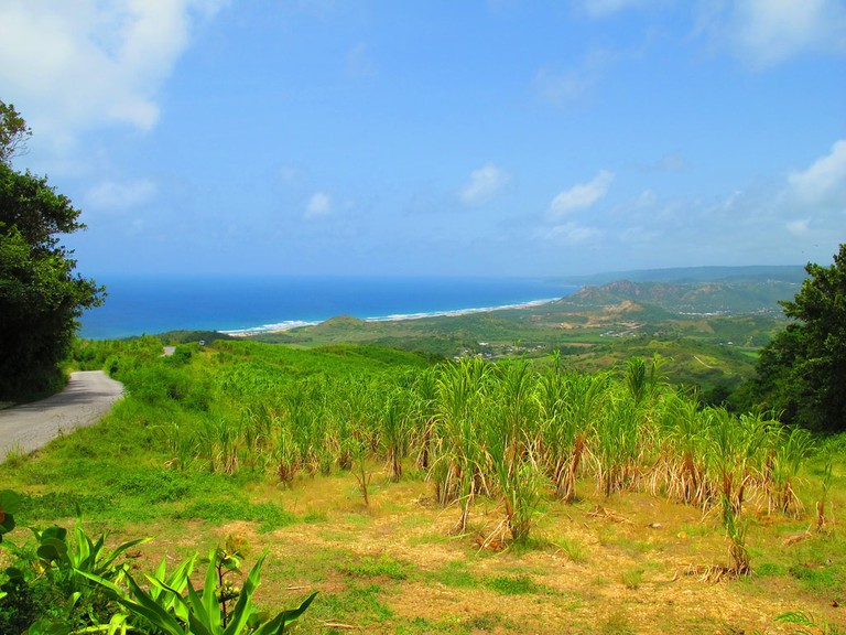 Sugar cane field, Barbados | © OakleyOriginals Flickr