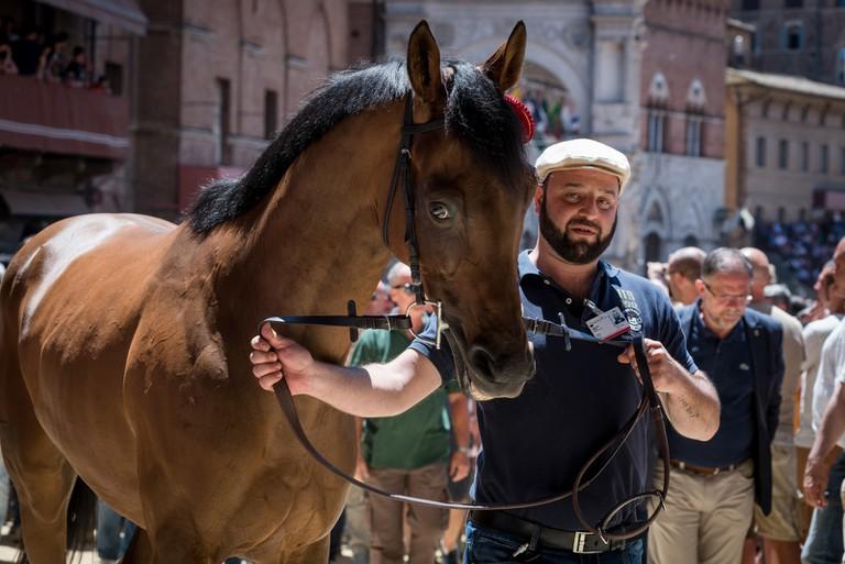 TRATTA-PALIO DI SIENA-SIENA-ITALY