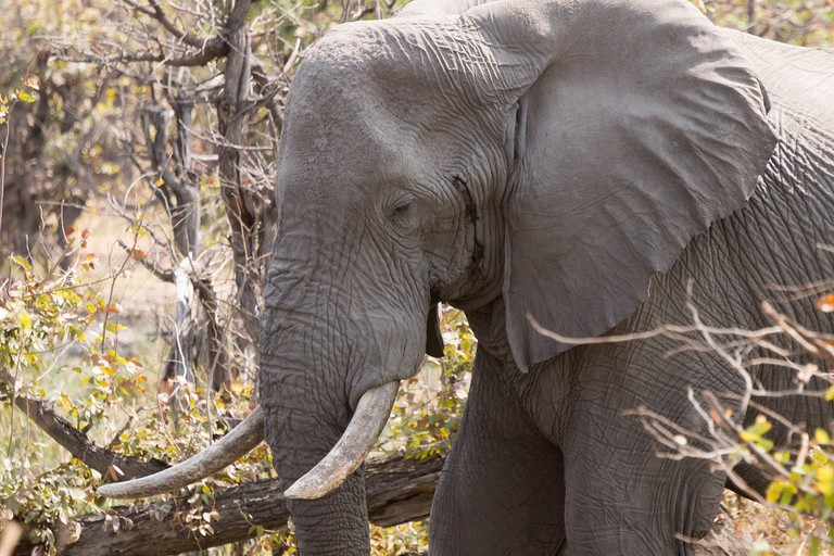Interact with the mighty elephants of the Okavango Delta