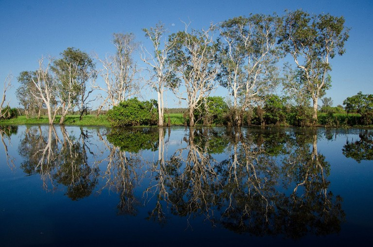 Yellow Water billabong reflections