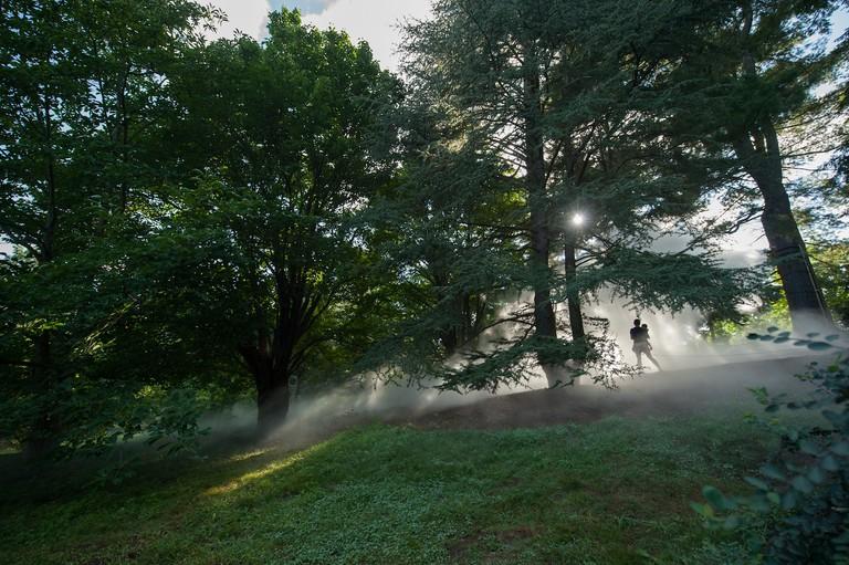 Arnold Arboretum of _Fog x FLO's Fog x Fall_ by Melissa Ostrow 1