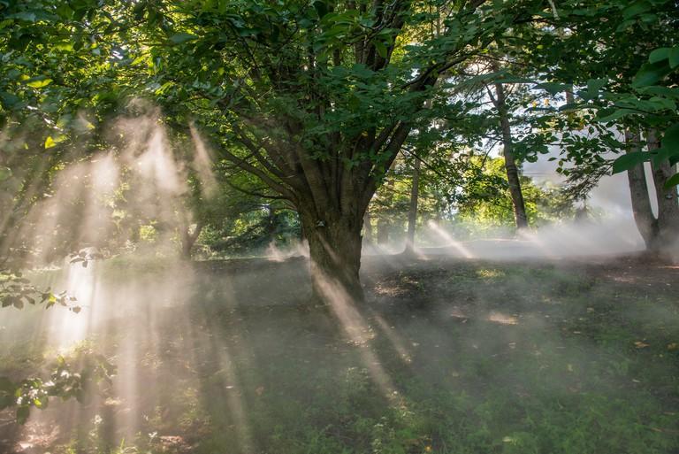 Arnold Arboretum of _Fog x FLO's Fog x Fall_ by Melissa Ostrow 4