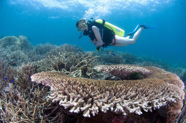 Woman diving over reef, Pom Pom Island Resort, Malaysia.