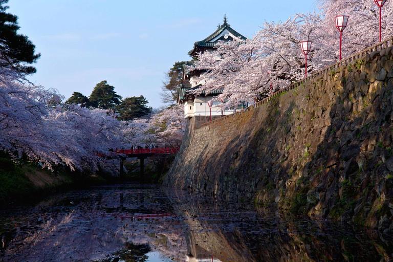 Cherry Blossoms in Hirosaki Castle, Hirosaki, Aomori Prefecture, Japan.