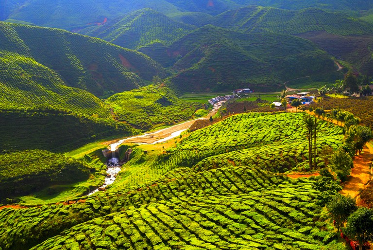 Tea plantations as far as the eye can see