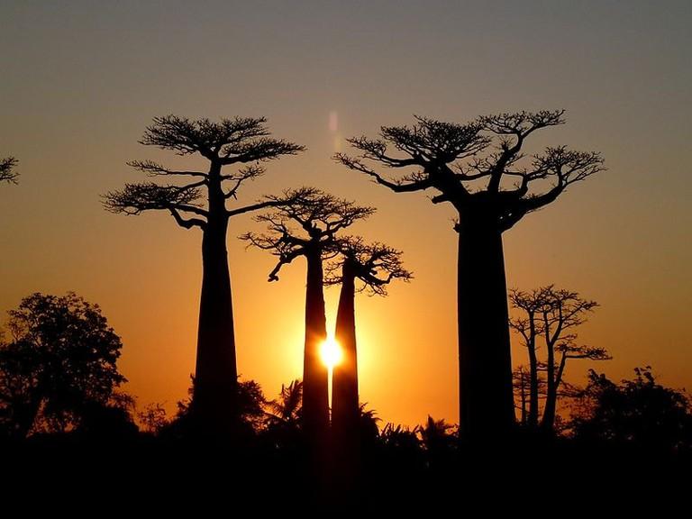 Sunset_Baobab_Avenue_Morondava_Madagascar_-_panoramio