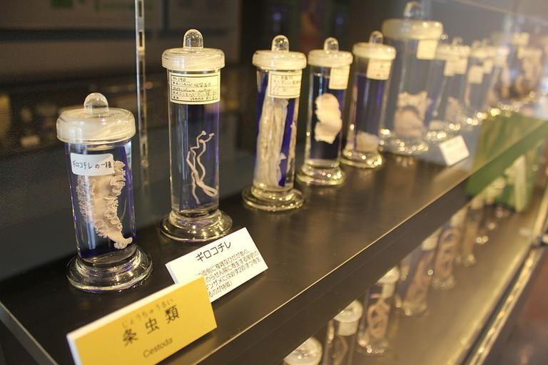 1024px-Laika_ac_Meguro_Parasitological_Museum_(7482791412)