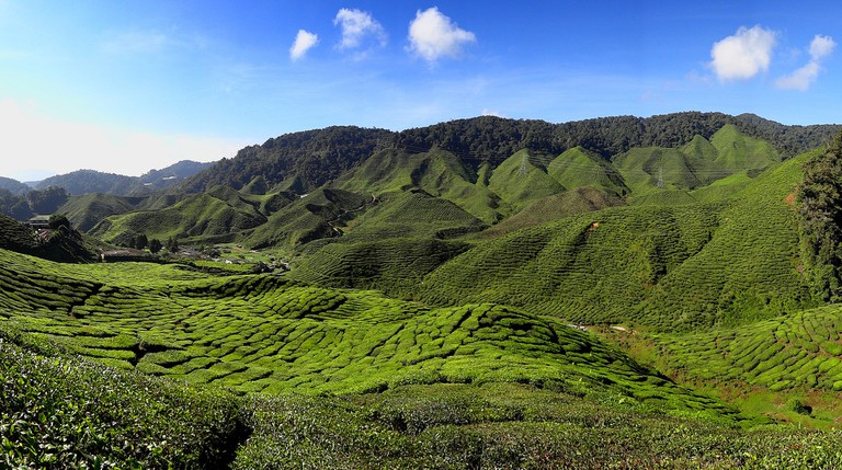 48 hours in cameron highlands