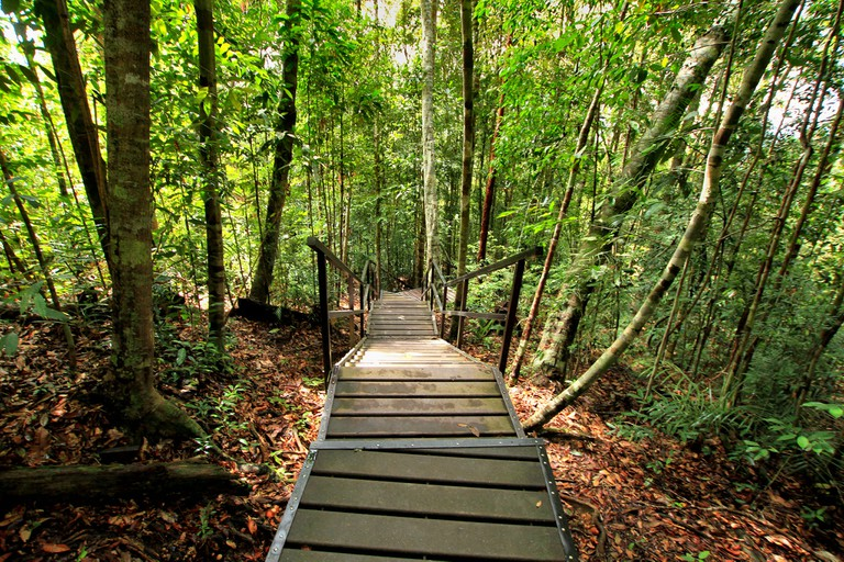 guide to taman negara