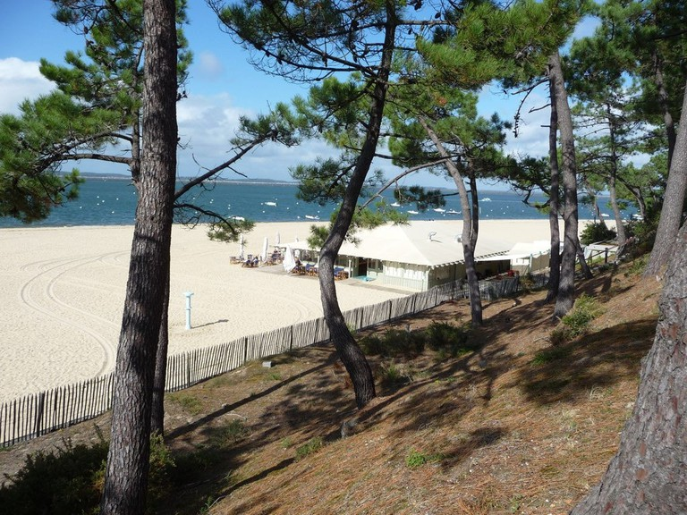 White sands and pine trees of the French Atlantic Coast